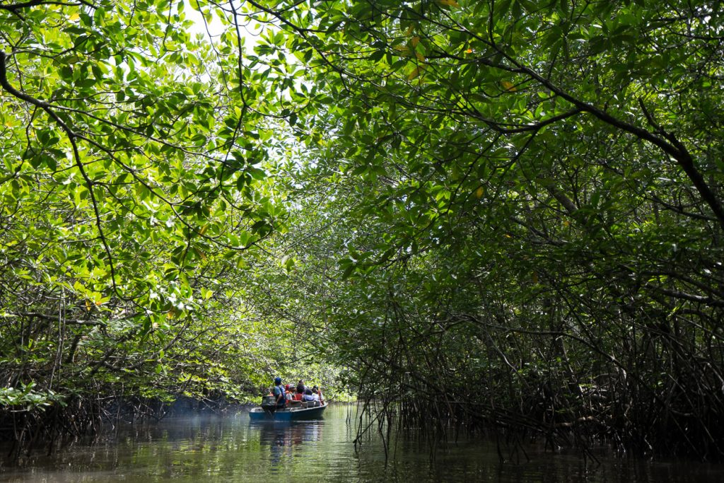 Mangrove Discovery Packages