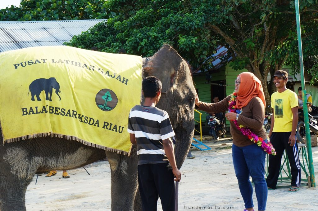 Bintan Elephants Park Tours & Ride